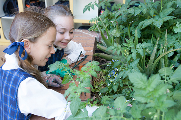 St Francis de Sales Catholic Primary School Woolooware Co-curricular Gardening Two students planting in a garden
